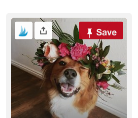How to get more followers on Pinterest with Tailwind